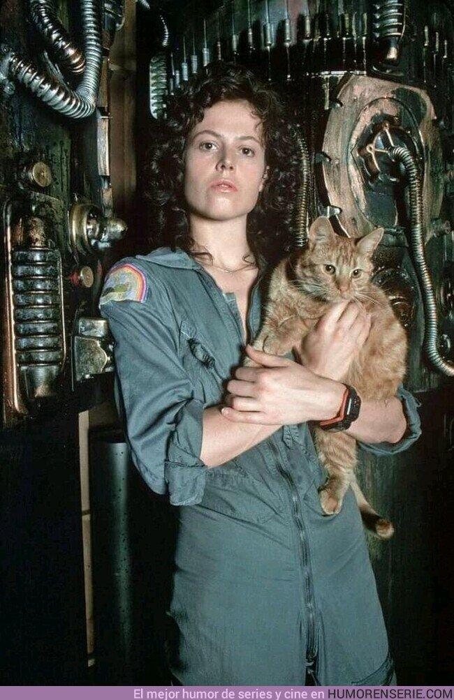 68951 - Hay gatos que son más listos que una tripulación y lo sabes