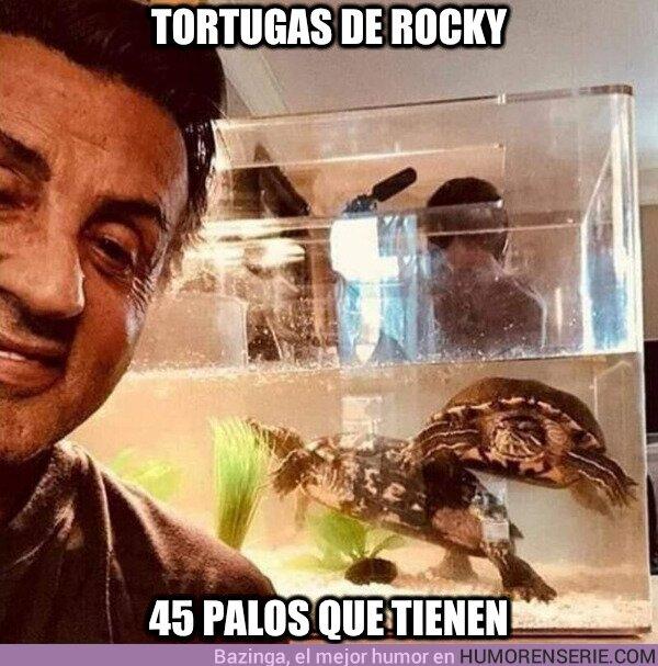 77505 - Sylvester Stallone aún conserva las tortugas de Rocky. Tienen 45 años
