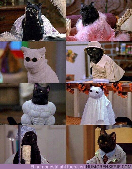 77683 - Cualquier día es bueno para recordar a Salem disfrazado