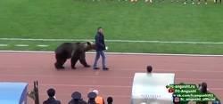 Enlace a Lo habrás visto todo tras ver a este oso haciendo el saque de honor en la tercera división rusa