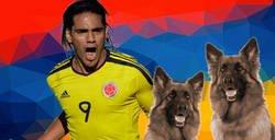 Enlace a El colombiano promedio celebrando, dándolo todo
