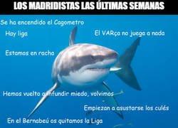 Enlace a Los catalanes han pescado a ese gran Tiburón Blanco