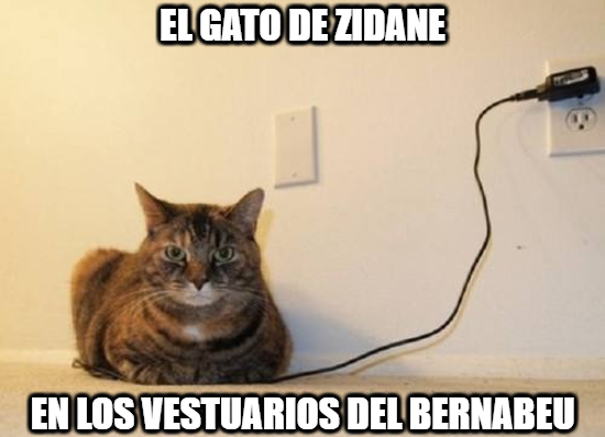 1069911 - El gato enchufado