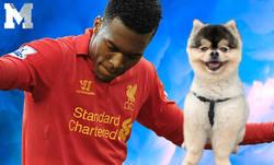 Enlace a Grave acusación contra Daniel Sturridge por no haber pagado supuestamente la recompensa que ofreció por su perro perdido
