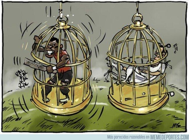 1082748 - La jaula de oro es tan cómoda para unos como incómoda para otros, por @yesnocse
