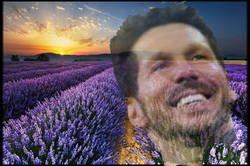Enlace a La flor de Simeone