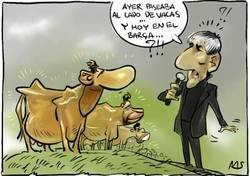 Enlace a En el Barça también hay vacas, pero estas son sagradas, por @yesnocse