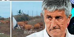 Enlace a ¡El hijo de Setién le pregunta a las vacas si el Barça ganará la Champions! Asegura que le han respondido