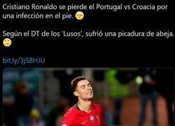 Enlace a Cristiano se pierde el partido contra Croacia por una abeja. O así se excusó.