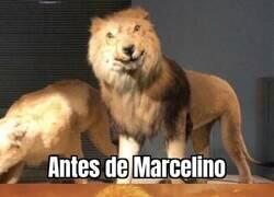 Enlace a Los leones del Athletic tienen otra cara