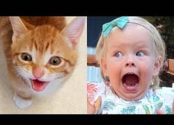 Enlace a La prueba de que los gatos son como niños pequeños