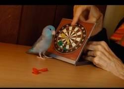 Enlace a Los pajaritos también pueden jugar a los dardos... a su manera