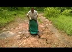Enlace a El encantador de serpientes que libera a 285 a la vez