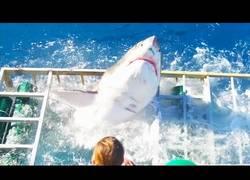 Enlace a Este enorme tiburón blanco rompe la jaula donde estaba metido un buzo