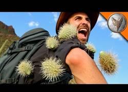 Enlace a El dolor que se siente cuando deben arrancarte varios cactus pegados a tu cuerpo