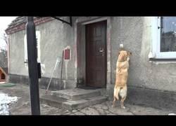 Enlace a El perro que se olvidó las llaves y no deja de tocar al timbre