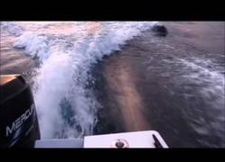 Enlace a Esta orca empieza a perseguir una lancha con adolescentes