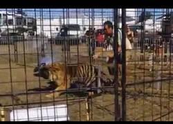 Enlace a Este es el motivo por el que deben dejar los animales salvajes en su lugar donde viven