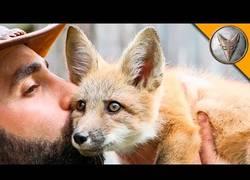 Enlace a Nuestro aventurero favorito conoce a un precioso bebé de zorro