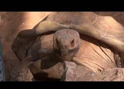 Enlace a El señor tortuga que no deja de decir