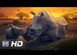 Enlace a DREAM, Un vídeo musical que capta los sueños rotos de los animales muertos por obra del hombre
