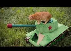 Enlace a El gato de Vladimir Putin