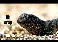 Enlace a La espectacular huida de esta iguana de una emboscada de serpientes