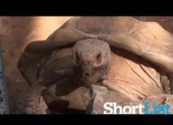 Enlace a La tortuga que solo dice WOW es en realidad fan de Owen Wilson