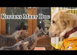Enlace a La curiosidad de estos gatos al conocer por primera vez a un perro