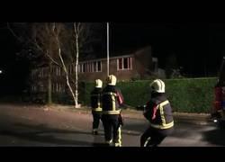 Enlace a El perro que ayudó a los bomberos a derribar un árbol