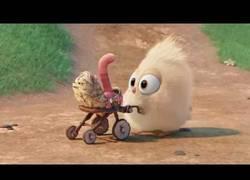 Enlace a El tierno corto de un pollito y su gusano, d elos creadores de Angry Birds
