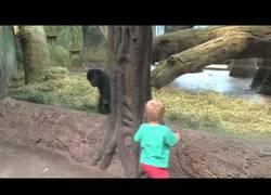Enlace a El niño de tres años que se lo pasa en grande con un gorila en el zoo jugando al escondite