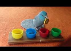 Enlace a El periquito que guarda cada botón con su color