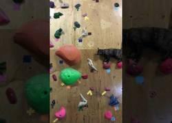 Enlace a Esta pared de escalada es el paraíso de este gato