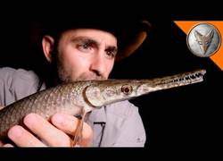 Enlace a Nuestro coyote aventurero favorito encuentra en Texas una criatura que da miedo