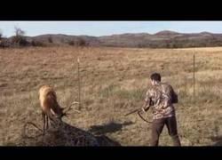 Enlace a Este ciervo queda atrapado en un gran alambre y un cazador le ayuda a salir
