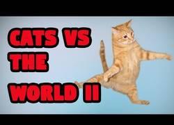 Enlace a Gatos vs el mundo: la gran batalla