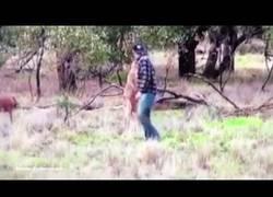 Enlace a Este hombre le da su merecido a un canguro por estrangular a un perro