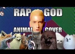 Enlace a Los animales rapeando igual o mejor que Eminem con Rap God