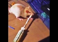 Enlace a La rata que repara una pantalla de ordenador