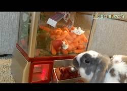 Enlace a El juego del atrapa objetos perfecto para conejos
