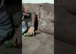 Enlace a El loro que se hace perfectamente el muerto mientras juega con su dueño