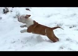 Enlace a La divertida experiencia de cachorros al ver la nieve por primera vez