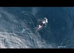 Enlace a Este drone graba como unas orcas negras se comen a un tiburón