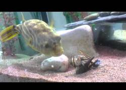 Enlace a Nunca le toques las narices a este pez o te hará pedazos