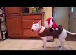 Enlace a Este perro es el nuevo Rudolph