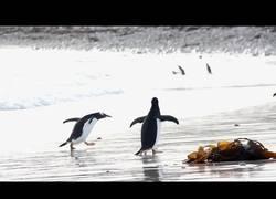 Enlace a La divertida reacción de este pingüino al tenerle miedo al agua