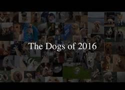 Enlace a La cara más entrañable de los perros en 2016