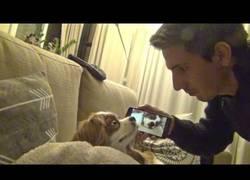 Enlace a El dueño de este perro le paga con la misma moneda y le despierta con sus ronquidos