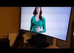 Enlace a Perro con televisión y comida con final triste :(